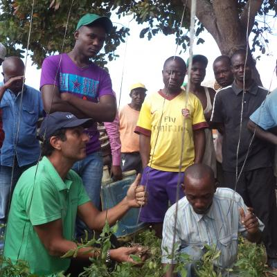 Training on good agricultural practices (tomato staking)