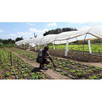 Cultivos de horticultura protegida