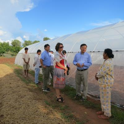 Round Year vegetables production in Plastic Net