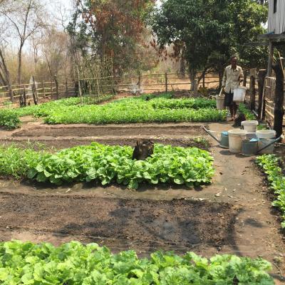 Open home garden in Kratie province