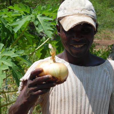 Улучшенный сорт лука IPA 11 из Бразилии, адаптированный к тропическому климату и имеющий более длительный срок хранения